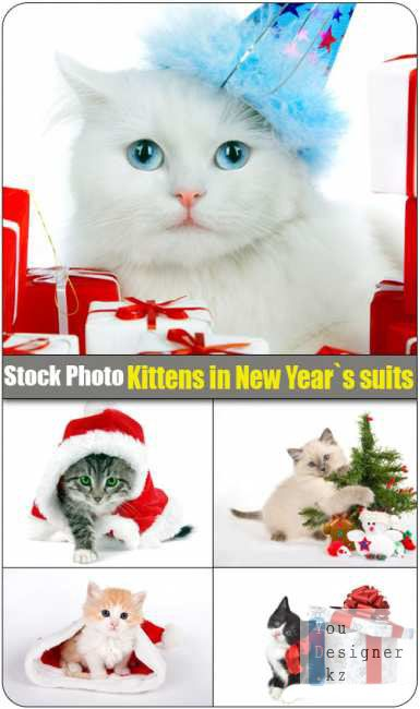 Stock Photo: Kittens in New Year suits