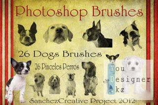 Dogs Brushes