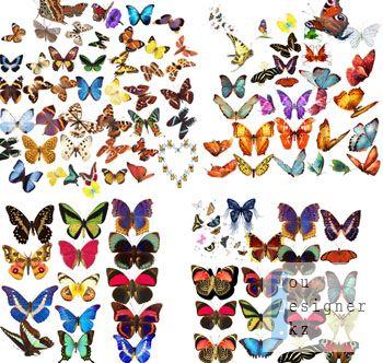 Клипарт-Бабочки / Clipart-Butterfly