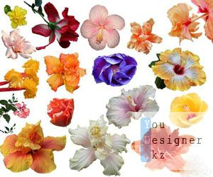 beautiful_spring_flowers_clipart_for_photoshop_1302259422.jpeg (22.39 Kb)