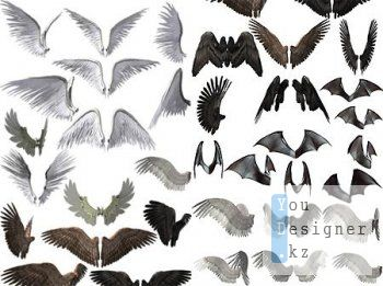 Большая коллекция крыльев / Large collection of wings