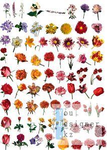 cvety11.jpg (25.41 Kb)