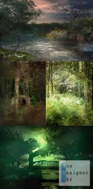Depths of the forest