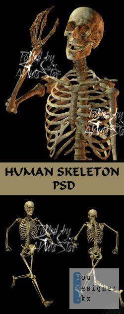 Шаблон для фотошоп - Скелет человека \ Human Skeleton