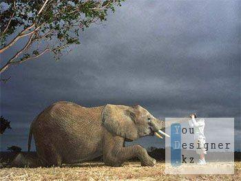 Шаблон для фотомонтажа - слон и малыш / Template for photomontage - elephant and kid