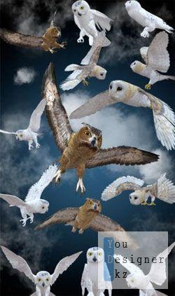 owl__png_klipart_sovy.jpg (26.14 Kb)