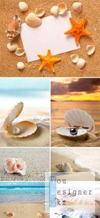 Stock Photo - Seashells 2 | Сток фото - Ракушки