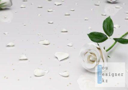 Свадебный футаж - фон с розами