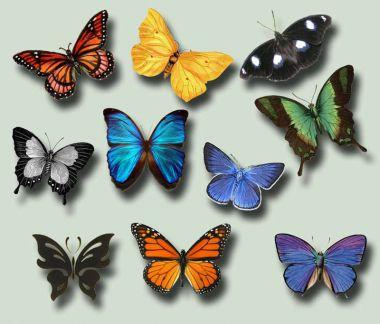 butterfliesravenarcana.jpg (141.71 Kb)