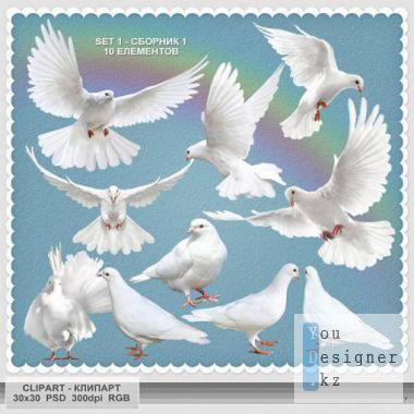 cl-psd-dove1-1326032647.jpg (54.22 Kb)