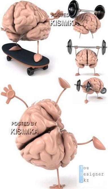 human-brain-1329940461.jpeg (.96 Kb)