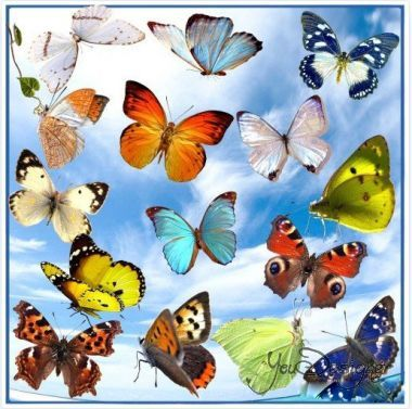 Clipart - Beautiful butterfly on a transparent background