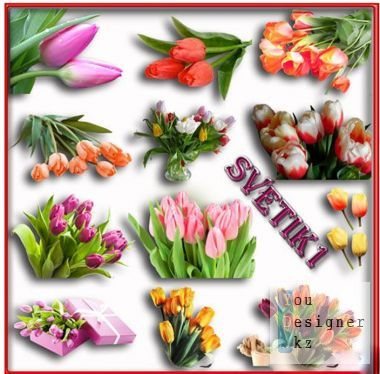 Clipart - Tulips on a transparent background