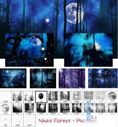 night-forest-1327077182.jpeg (67.89 Kb)